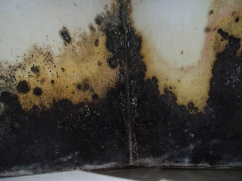 schimmel im schlafzimmer gesundheit lattenroste knarren bettw sche aldi nord schlafzimmer wald. Black Bedroom Furniture Sets. Home Design Ideas