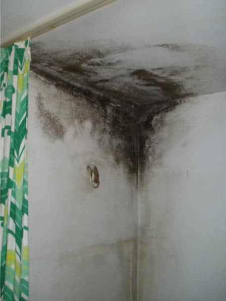Schimmel im oberen Eckbereich der Dusche